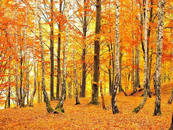 Walking in the woods is so refreshing v-v HDR0206_1b2d4663-ae16-4485-a93c-0b1e974e0c11_grande