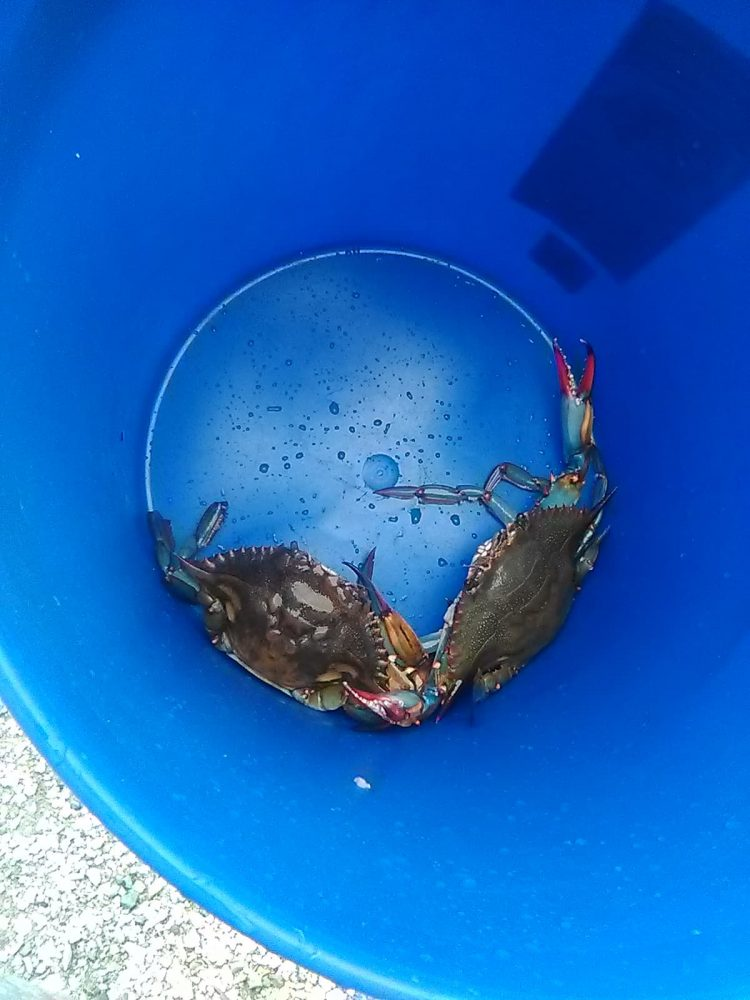 my day was awesome went crabbing with my husband and our daughter it started out with these 2 then b