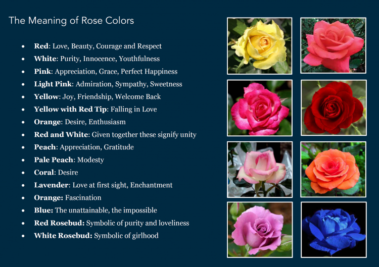 *Rose-Color-Meaning