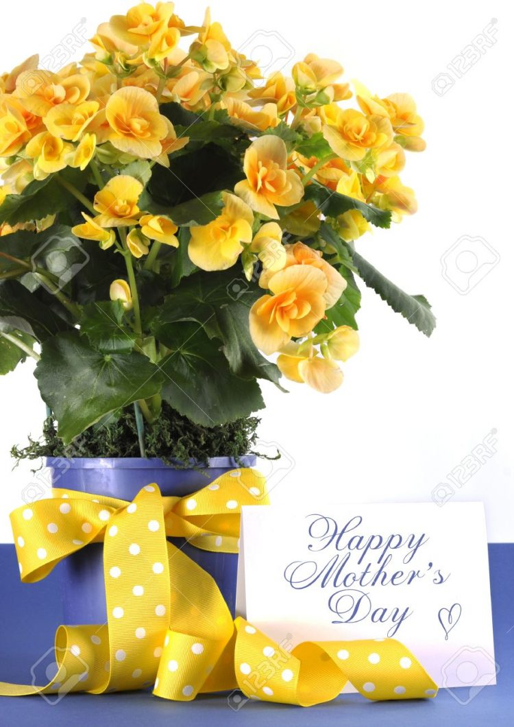 Happy Mother's day mommy Ali! @candycandyali @sonar @ecko 27710197-happy-mothers-day-beautiful